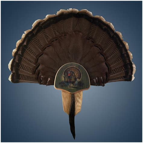 how to mount a turkey fan walnut hollow oak drumsticks turkey fan mount kit 616363