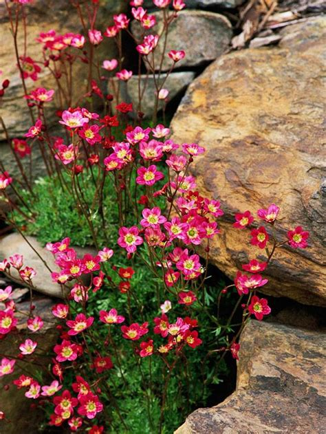 colorful ground cover rock garden design ideas for the home