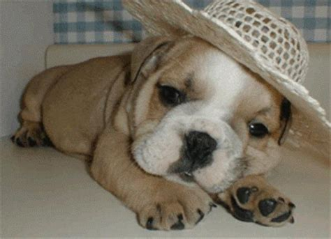 puppies with hats dogs with hats