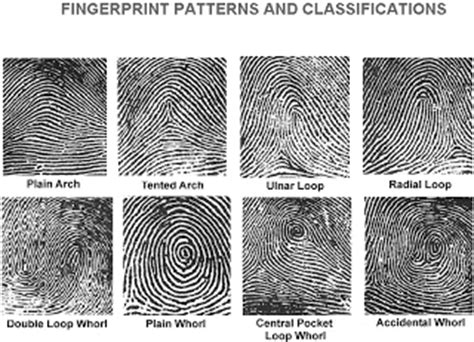 pattern types of fingerprints image gallery different fingerprints