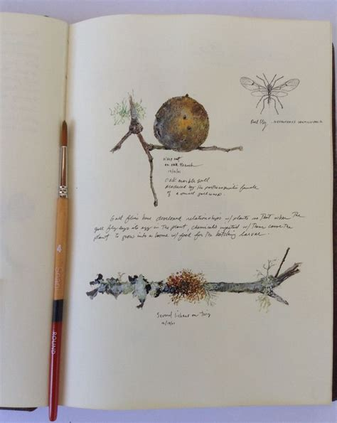 sketchbook nature 25 best ideas about nature journal on field