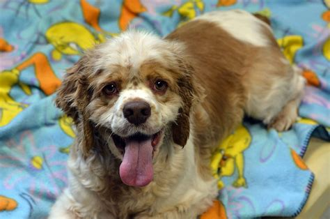 upaws dogs recently adopted peninsula animal welfare shelter