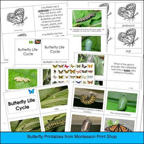 montessori printable shop preschool butterfly unit wrapped up in a basket spell