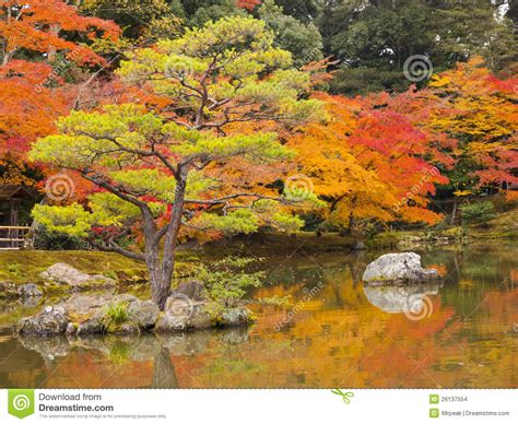 giardini giapponesi immagini giardino giapponese in autunno immagini stock immagine
