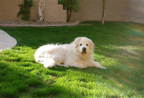 when is a considered a senior ahwatukee animal care hospital and pet resort senior pet care and geriatric medicine