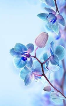 orchid live wallpaper apk download for android