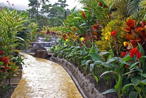 tropical garden flowers tropical garden with waterfall flowers nature