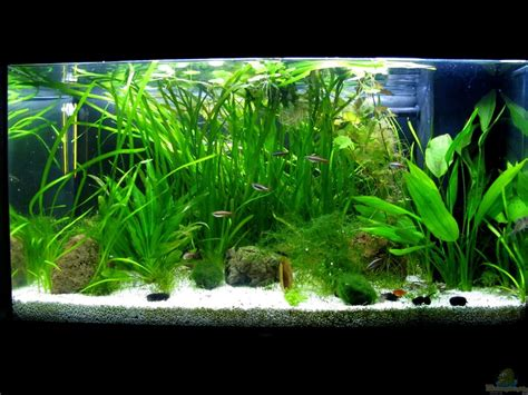 aquarium led beleuchtung exle no 22278 from the category community tanks
