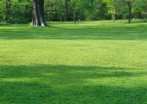 imagenes prados verdes banco de im 225 genes para ver disfrutar y compartir un