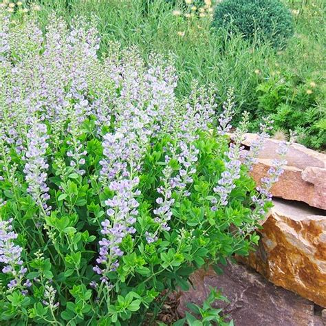 top plants that thrive in clay sun perennials and flower