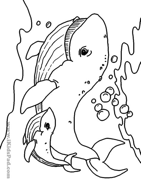 coloring pictures of animals in the sea free printable sea animals coloring book for coloring