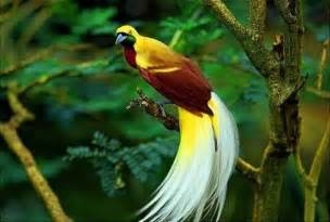 bird of paradise animal wildlife