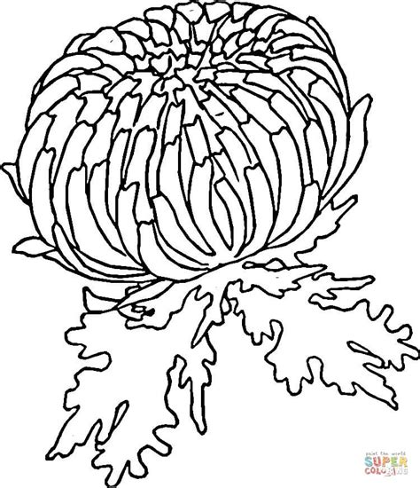 Coloring Page Zinnia by Zinnia Coloring Page Supercoloring