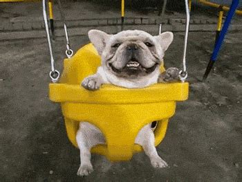 puppies gif happy swing gif find on giphy