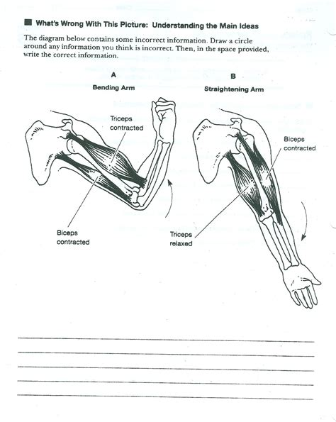 Muscular System Worksheet by Label The Musles Worksheet Images Frompo 1