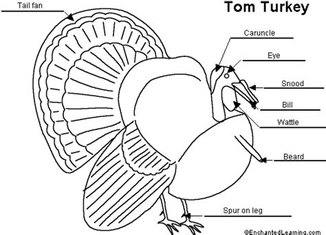 parts of a turkey coloring page winter coloring pages printable free images coloring