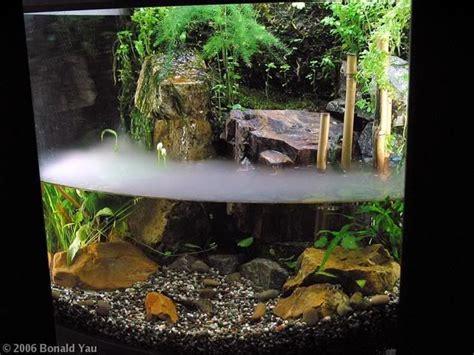 aquarium design in bangladesh i wanna start saving so ryan i can have a paludarium