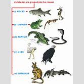 class-reptilia-examples
