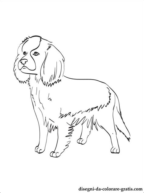 coloring pages of cavalier king charles spaniels disegno di cavalier king charles spaniel da colorare