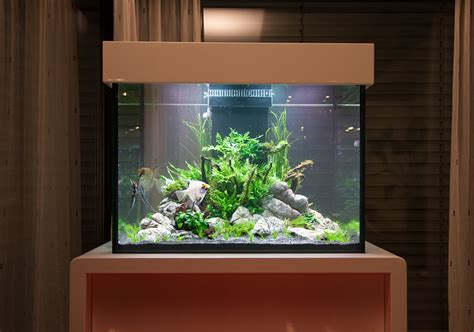 oliver knott aquascaping aquascape by oliver knott photo oliver knott the aqua