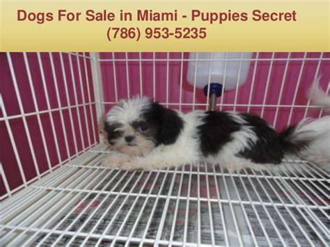 puppy stores in miami puppies in miami fl