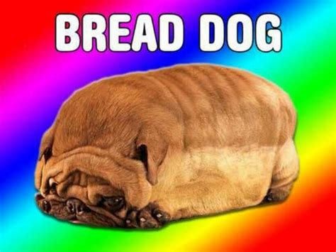 bread puppies bad advice on quot i ve been a bread http t co l4p1iwr7 quot