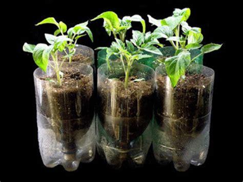 Tempat Jual Sekam Bakar hidroponik sederhana sebagai alternatif ayo berkebun