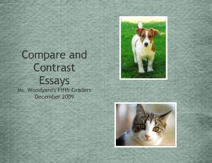 Compare And Contrast Essay On Cats And Dogs by Compare And Contrast Essay Dogs And Cats Pgbari X Fc2