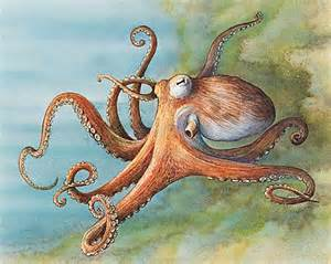 encyclop 233 die larousse en ligne pieuvre ou poulpe