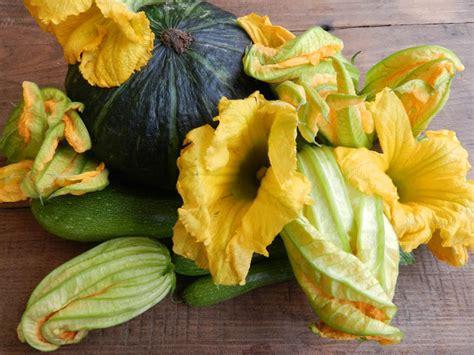 fiori e fornelli pentole e fornelli fiori di zucca in pastella