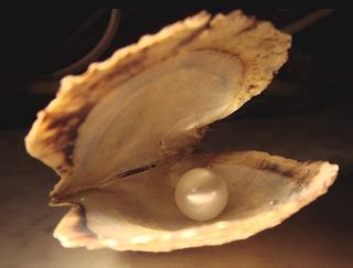 Kerang Mutiara Pearl 10 11 01 10 12 01