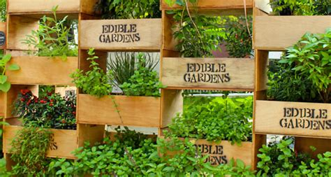 edible backyard plants the edible garden project go asia
