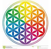 Flor De Los Colores Del Arco Iris La Vida Fotos