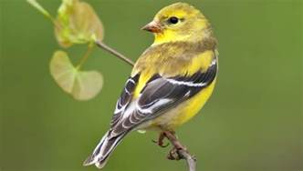 how to attract finches in your backyard backyard birds