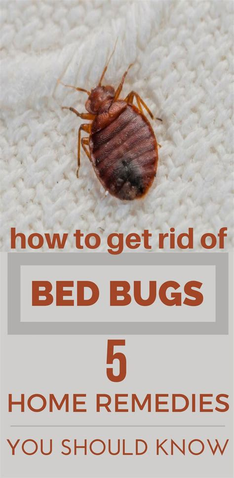 can you get bed bugs from laundromat these bed bugs can give you sleepless nights here s how
