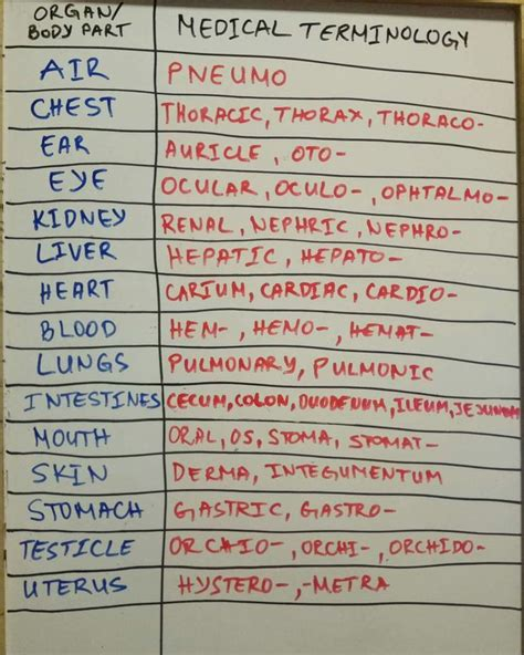 medical terms 25 best ideas about medical terminology on pinterest