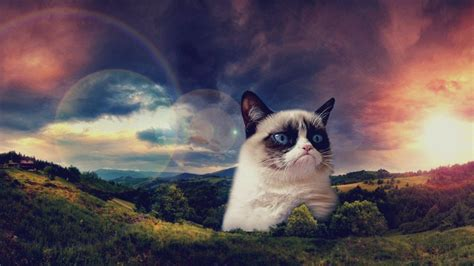 cat background warrior cats backgrounds 183