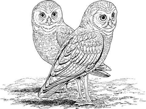 realistic owl coloring page realistic coloring pages coloringsuite com