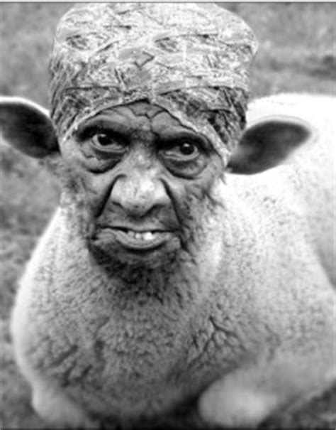 ugly sheep « The Jury Room
