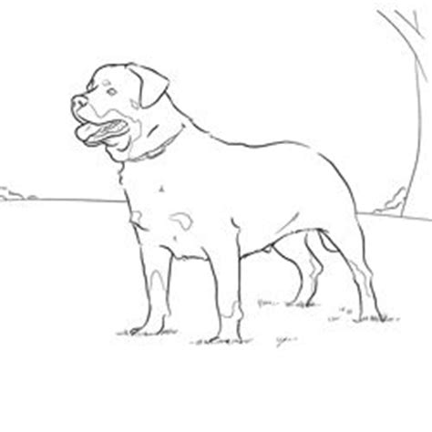 rottweiler coloring book rottweiler coloring page patterns