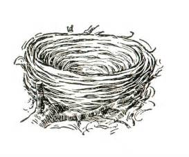 coloring page nest bird nest coloring book