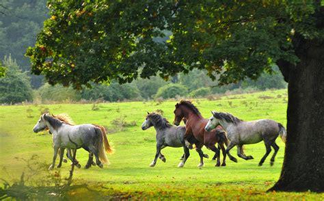 dati galoppo cavalli al galoppo juzaphoto