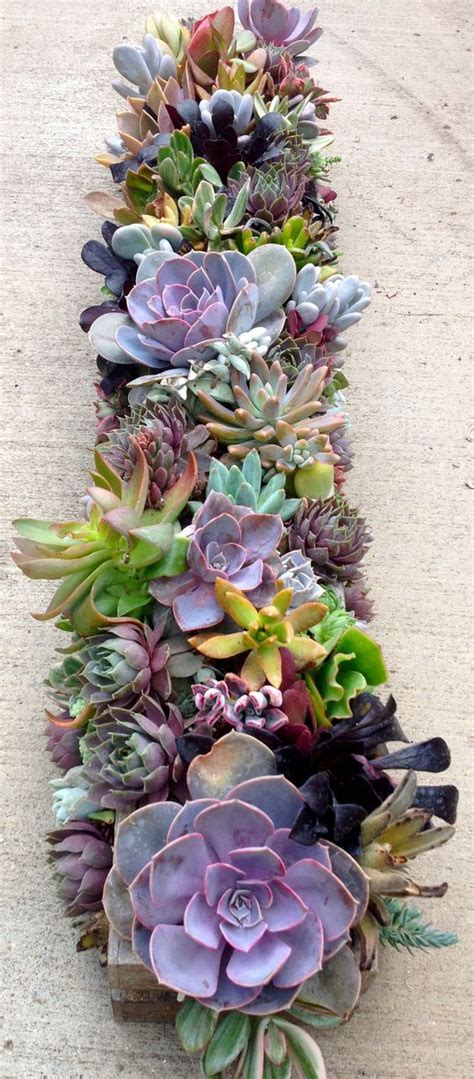 centerpieces with succulents 17 best ideas about succulent centerpieces on succulent wedding centerpieces table
