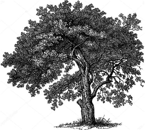 vintage tree vintage drawing tree stock photo 169 unorobus gmail 112186858