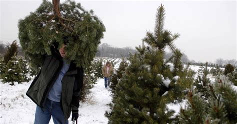 local nonprofits host christmas tree sales