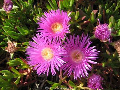 fiori san vito san vito lo capo