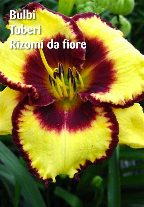 ingegnoli fiori sfoglia catalogo ingegnoli