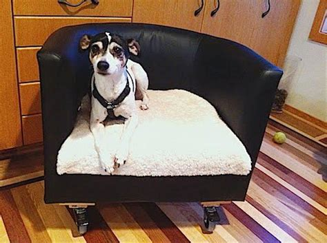 ikea dogs best ikea pet furniture cats and dogs