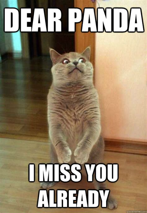 I Will Miss You Meme - funny i miss you cat pictures www pixshark com images