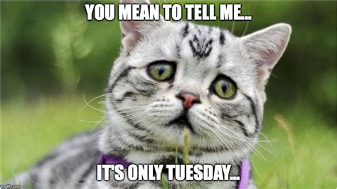 Tuesday Meme - its only tuesday kitty meme www pixshark com images